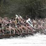 05-ngaruawahia-regatta